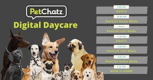 Petchatz - Doggy Daycare at Home by Remote