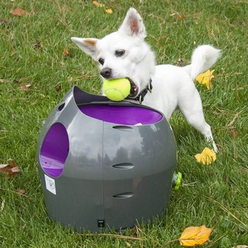 Automatic Ball Thrower for Dogs