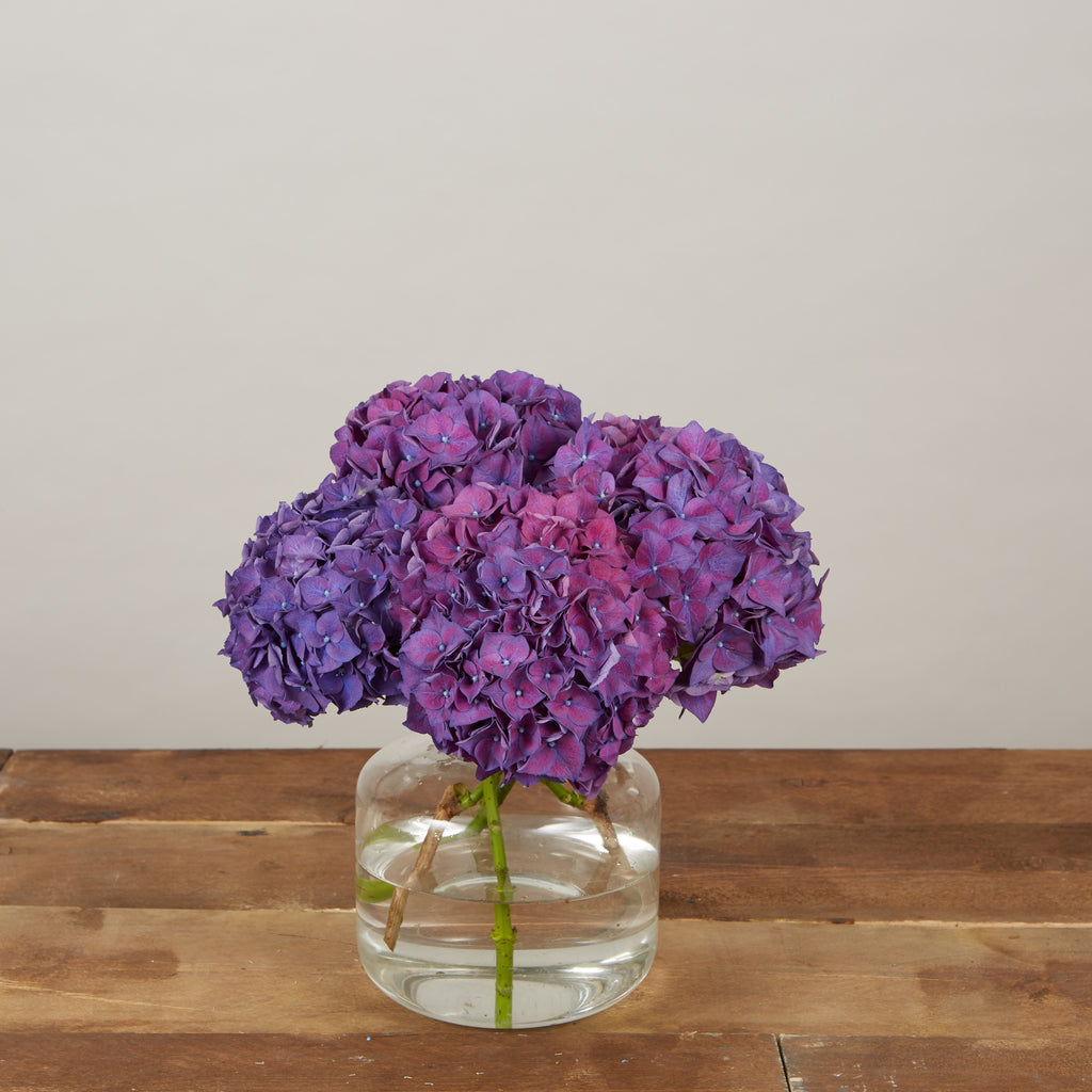 All Hydrangeas