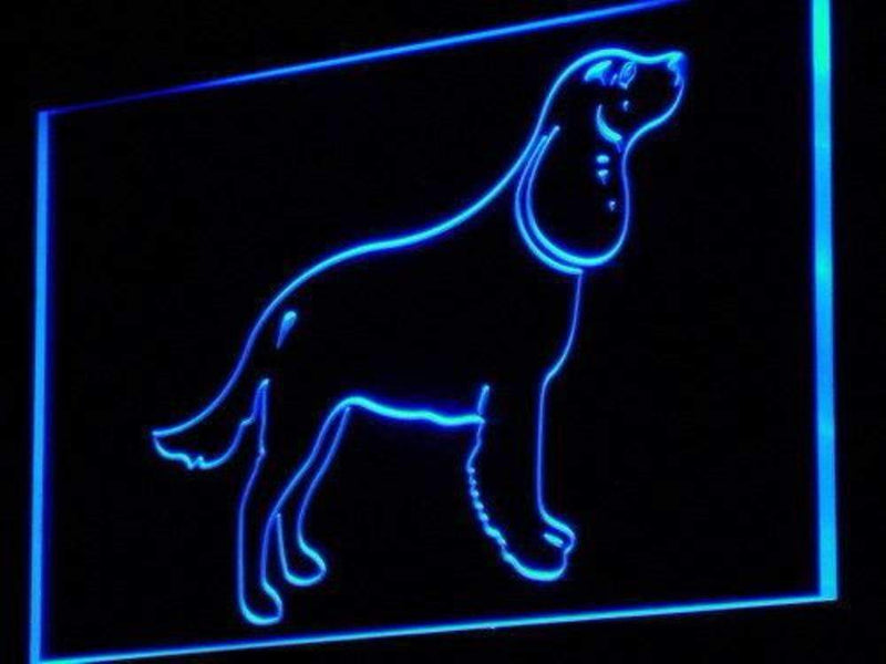 American Water Spaniel LED Neon Light Sign - Way Up Gifts