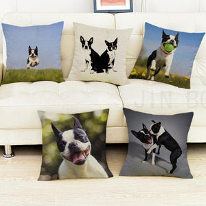 Boston Terrier Pillow (Photo Print)