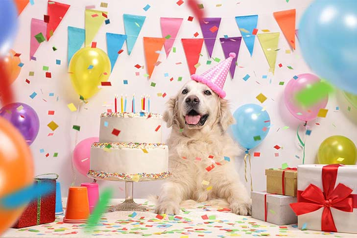 How to Throw the Perfect Dog Birthday Party