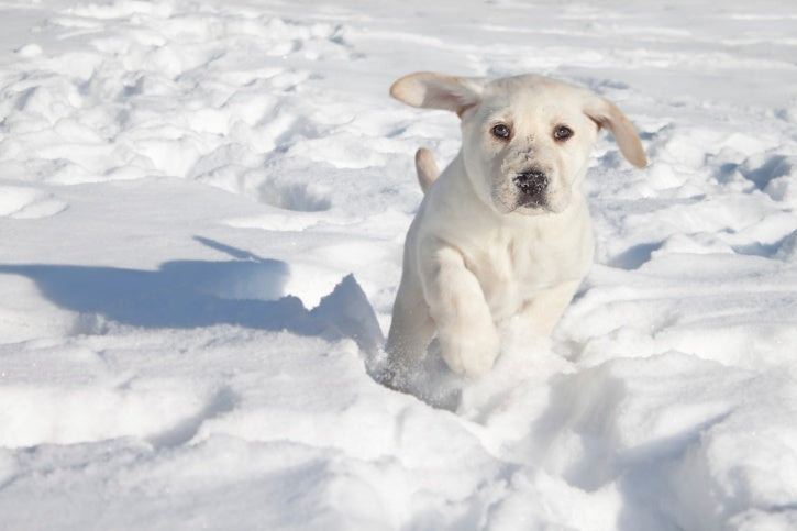 The Truth About Pets in Extreme Temperatures