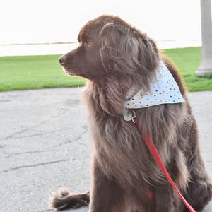Woodland Walk Dog Bandana