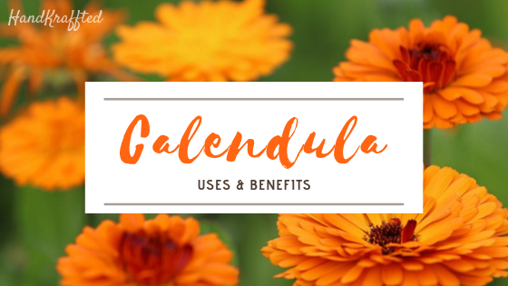 What is Calendula? Benefits & Uses