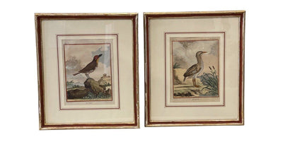 Engraving - PAIR OF 18TH CENTURY HAND-COLORED BIRD ENGRAVINGS