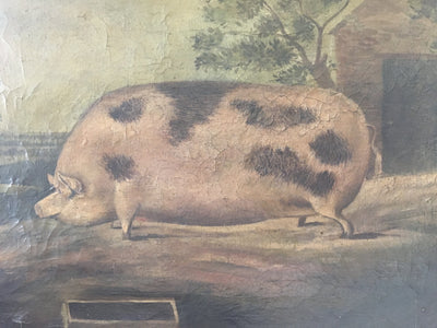 English Prize Pig Oil on Canvas c. 1850 - Helen Storey Antiques