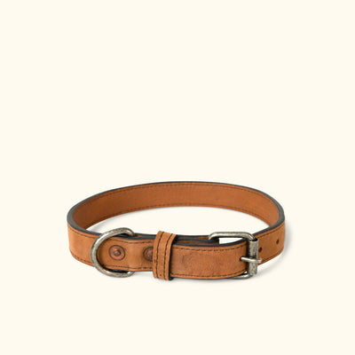 Denver Leather Dog Collar | Sienna Brown