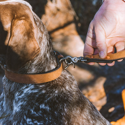 Denver Leather Dog Leash | Sienna Brown hover