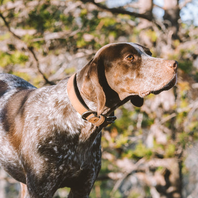 Denver Leather Dog Collar | Sienna Brown hover