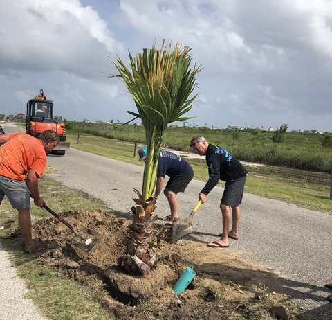 Tropical Maniacs of Matagorda Volunteers Planting Palm Trees
