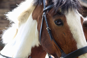 Practical Horse Browband Black or Brown