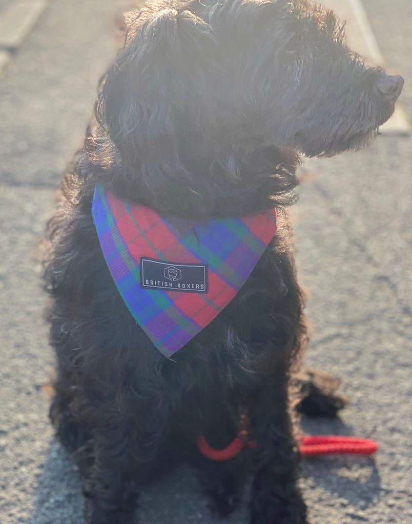 Dog Bandana – Bordeaux