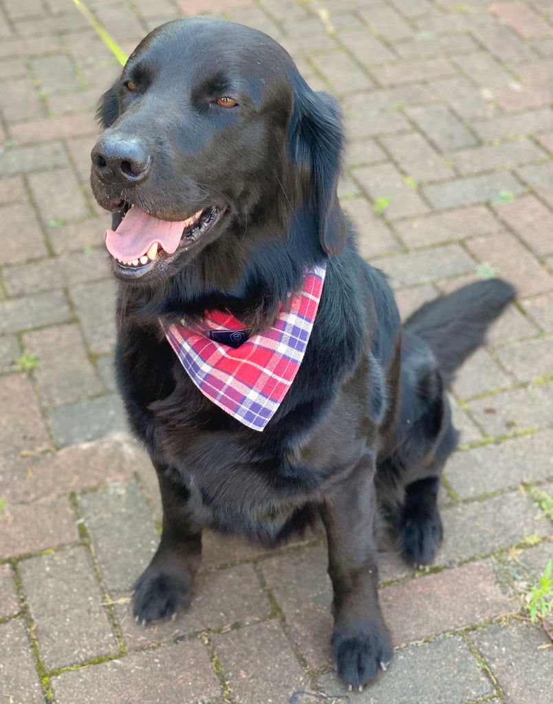 Dog Bandana – Soft Red Tartan