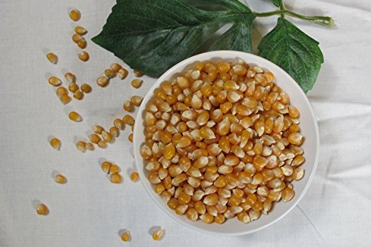 Yellow Popcorn Seeds 28 oz.