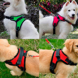 PACK No Pull Dog Harness