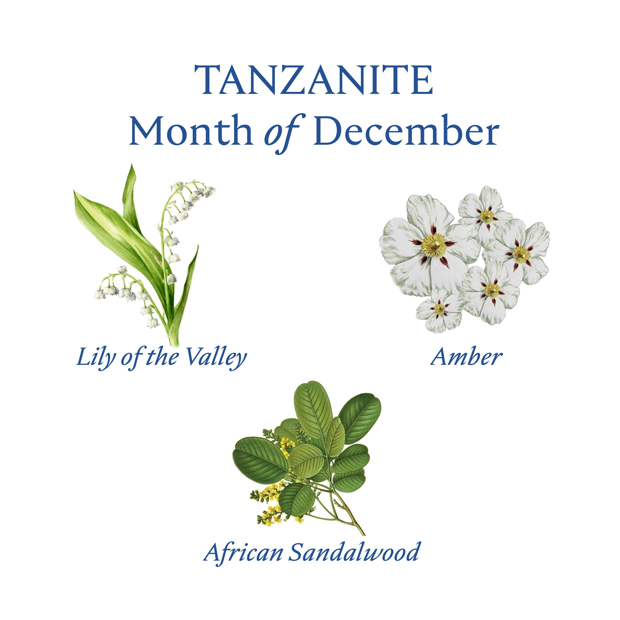 TANZANITE PERFUME OIL | December - Birthstone Scents