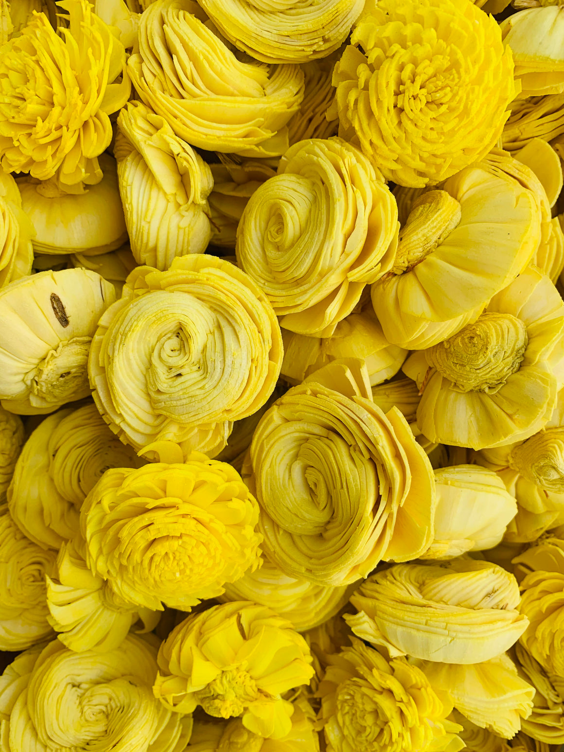 Yellow Dalia Mix
