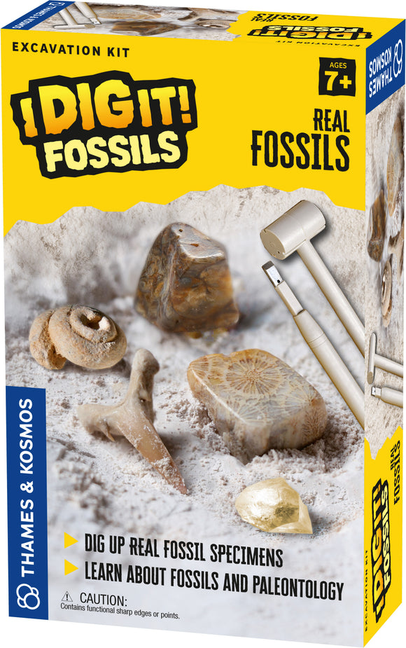 I Dig It Fossils-Real Fossils