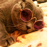 Cool Small Pet Cat Dog Glasses Funny - eStarkShop Buy electronics, fashion apparel, collectibles, sporting goods, and everything else on eStarkShop, the world's online marketplace.