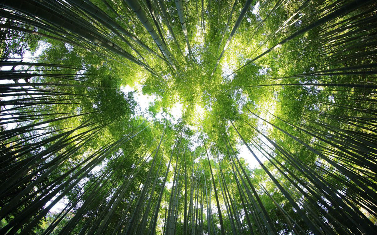 This TED Talk Will Give You A Whole New Perspective on Trees