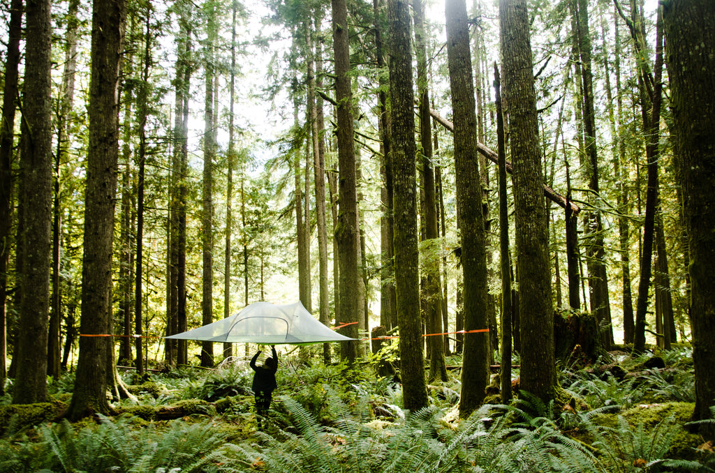 Tentsile Stingray Tree Tent in forest with man underneath.