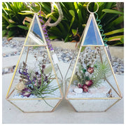 terrAIRium glass garden golden prism