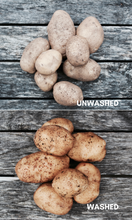 Certified Organic German Butterball Potatoes