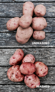 Certified Organic Red Pontiac Potatoes