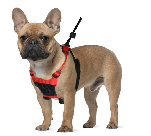 Sporn No Pull Mesh Dog Harness