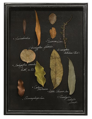Dried Botanical Leaves in a Shadow Box-DECORATIVE-Maker & Moss