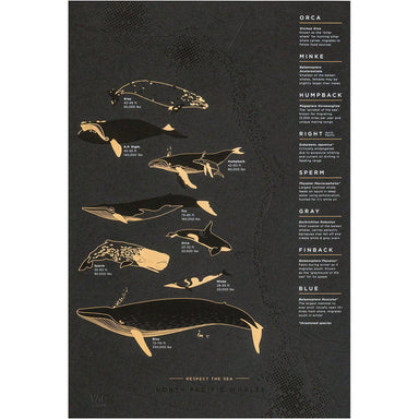 North Pacific Whale Migration-GALLERY-Maker & Moss