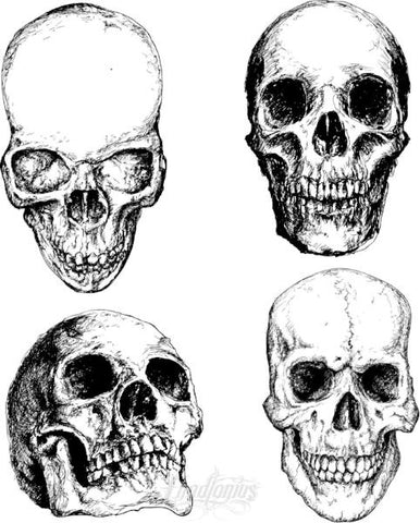 Hand Drawn Skulls Vector Set Ii Vector Chadlonius