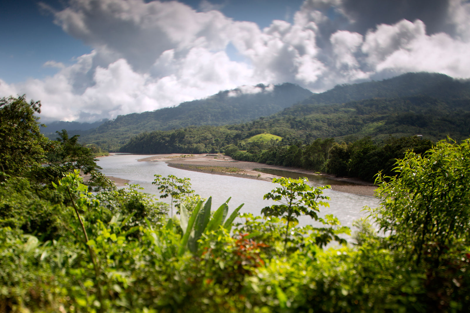 An Alliance for the Amazon: Joining Together To Fight for Change Article