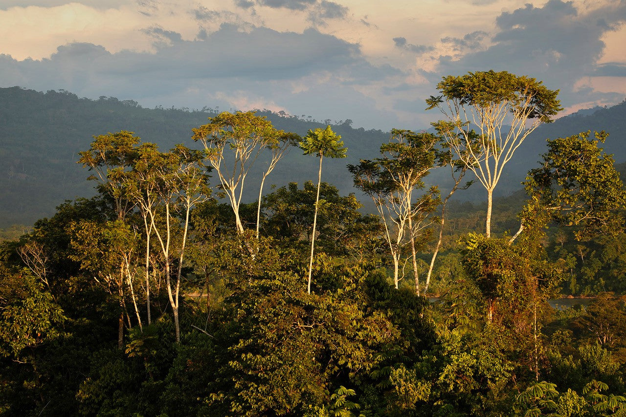 The Indulgent Gift Box That Restores the Rainforest Article