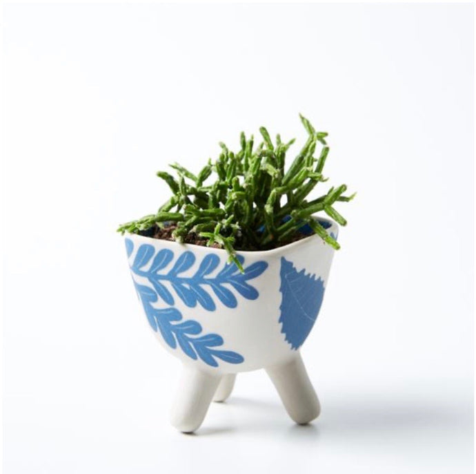 Pocket Planter Silica Footed