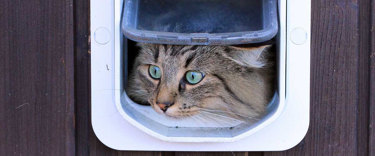 Cat Flap Check The Flap Is Suitable For The Type Of Door Or Location