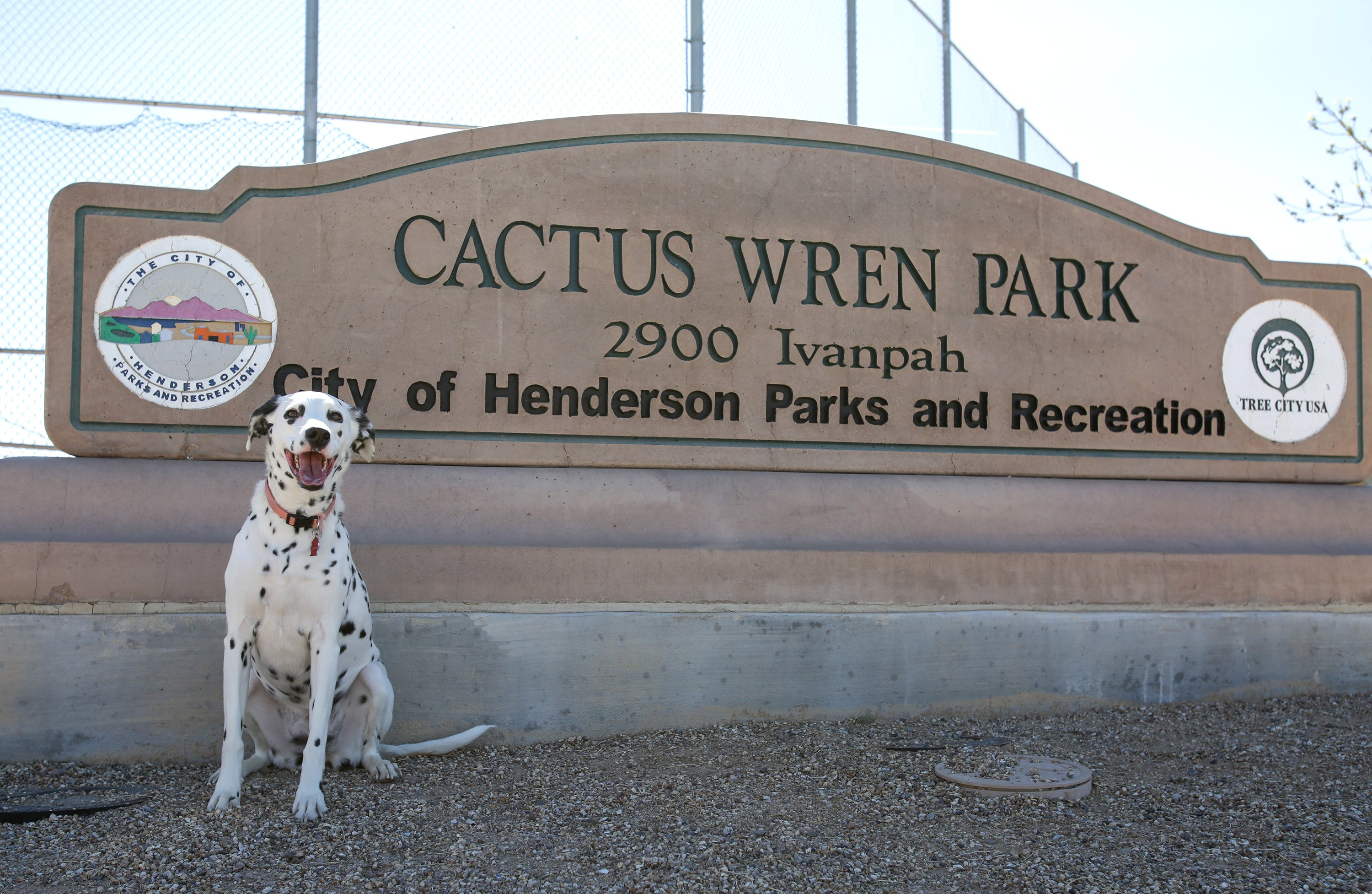 Las Vegas Dog Park Reviews: Cactus Wren Park