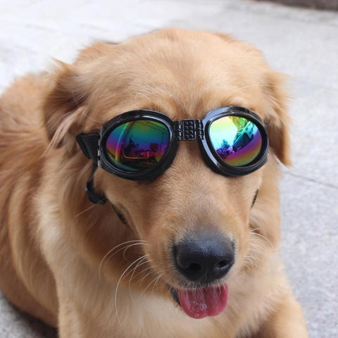 doggie sunglasses product model 2