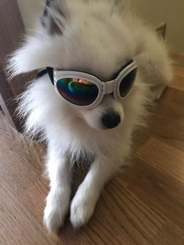 dog sunglasses product model 1