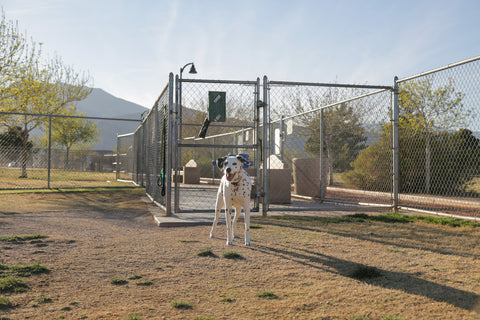 las-vegas-dog-park-reviews-police-memorial-park
