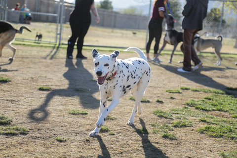 las-vegas-dog-park-reviews-police-memorial-park-london-the-local