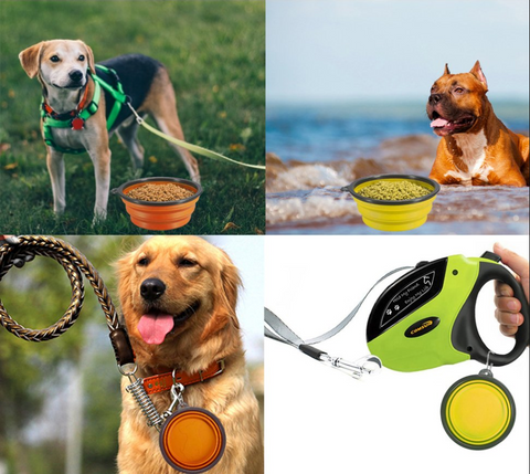 collapsible dog bowl models