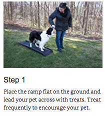 training your pet 1