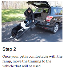 training your pet 2