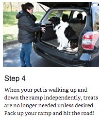 training your pet 5