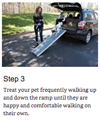 training your pet to use a ramp 3
