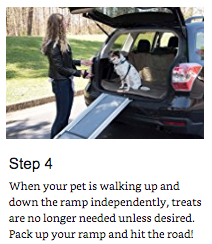 training your pet to use a ramp 4