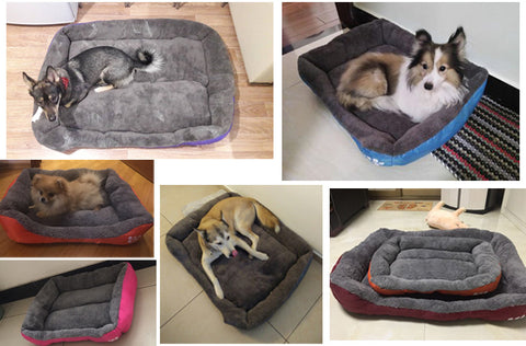 product models for dog bed