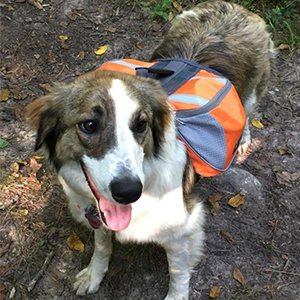 durable dog hiking backpack